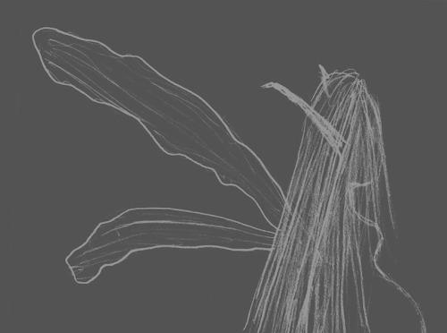 Les fées mères, telles qu'ailes