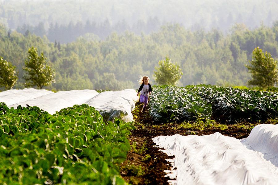 ferme Croque-saisons, Légumes bios