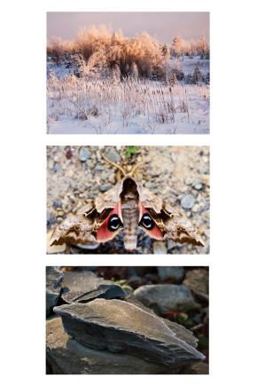 photographie, animaux, nature