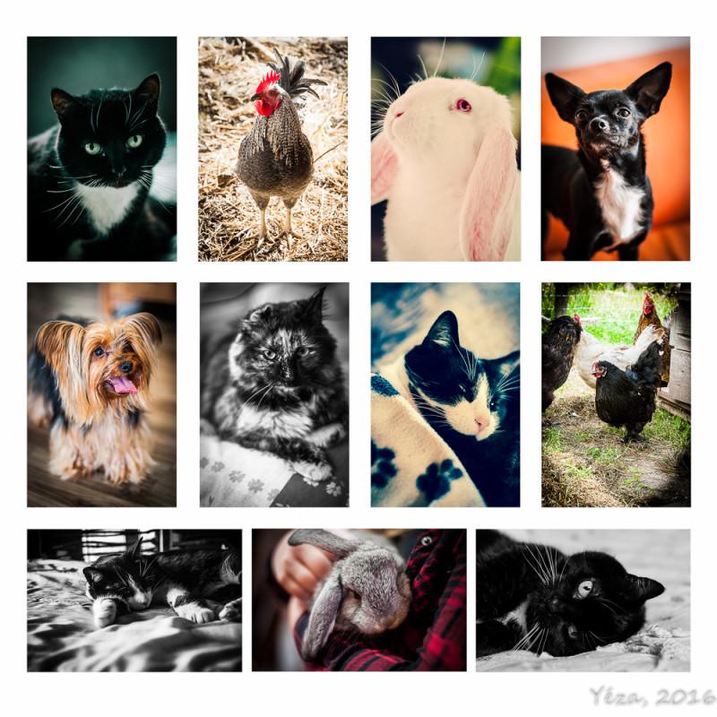 photographie animaux